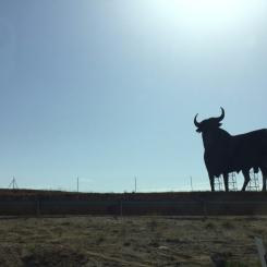 Taureau sur le bord de l'autoroute entre Consuegra et Madrid. / Bull on the edge of the highway between Consuegra and Madrid.